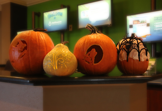 All Contestant's Pumpkins
