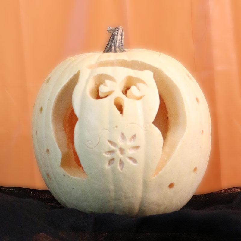 Cynthia-Owl